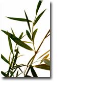 Tanda Zodiak Pohon Celtic Willow