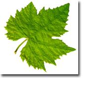 Tanda Zodiak Pohon Celtic Vine